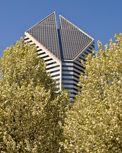 Building Bloom Vertical