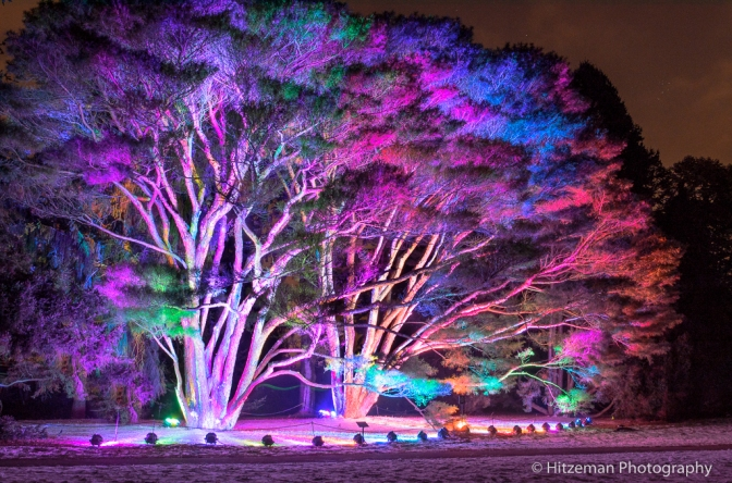 Tree-Light-Ful