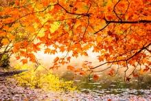 Red Leaf Splendor