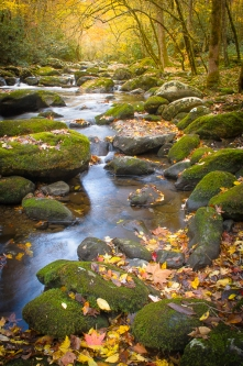 Mossy Little River
