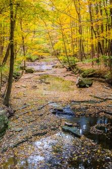 Leafy Creek #2