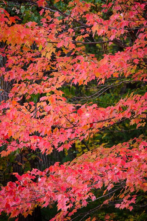 Fall Glory